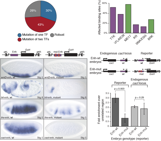 Vielfaltigs TAGteam motif is a key component of early transcriptional regulation